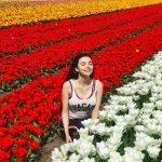 Dutch flower fields
