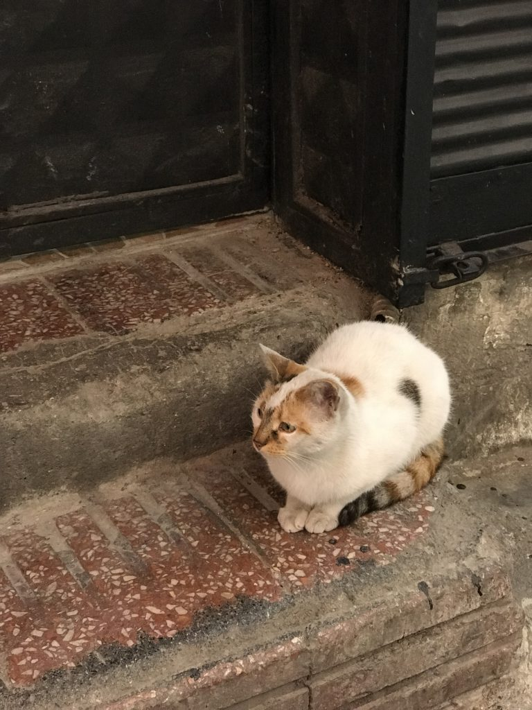 cats of the grand bazar