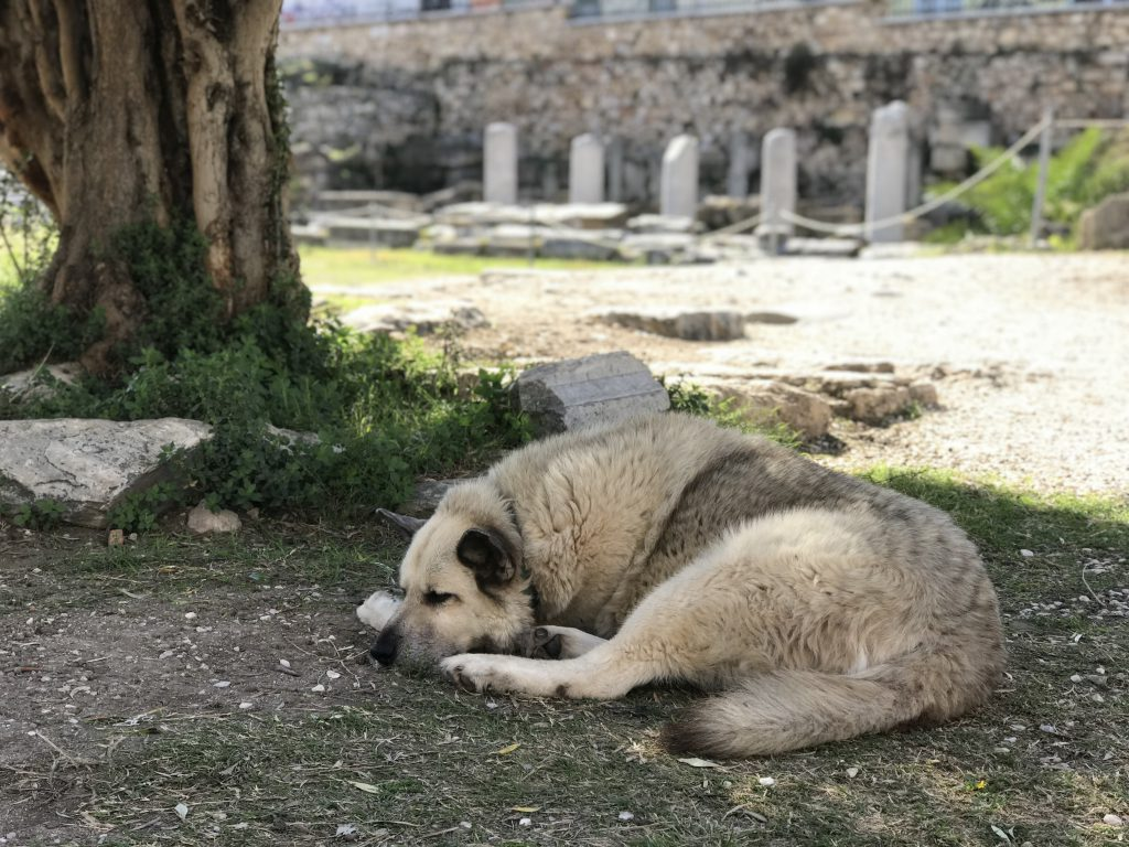 tired in athens