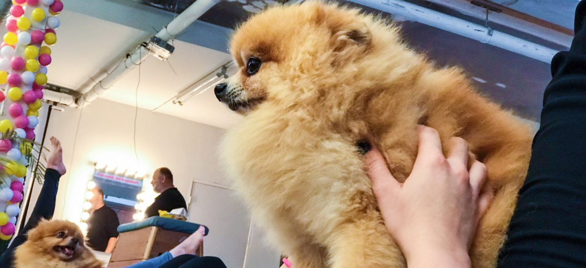 Keeping Fit in Amsterdam: Pilates with Puppies